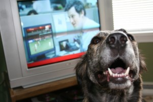 DOG IN FRONT OF TV